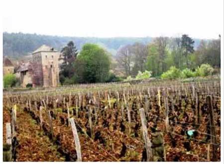 Burgundy  - a favourite region of Emma's (c) Emma Cazabonne