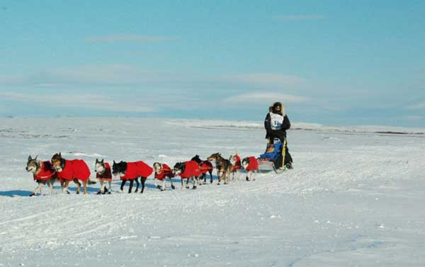 Robert Sørlie's team approaches Nome, 2007 (c) Wikipedia