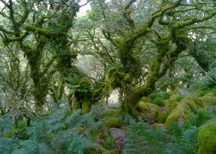 Dartmoor (c) Karen Maitland