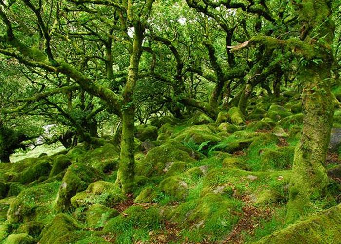 Wistman's wood (c) Visitdartmoor.co.uk
