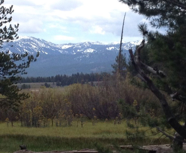 Alder Creek View (c) Alma Katsu