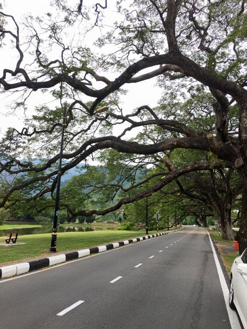 Taiping gardens, close to the church where Dr. MacFarlane's (fictional) grave is (c) Yangsze Choo