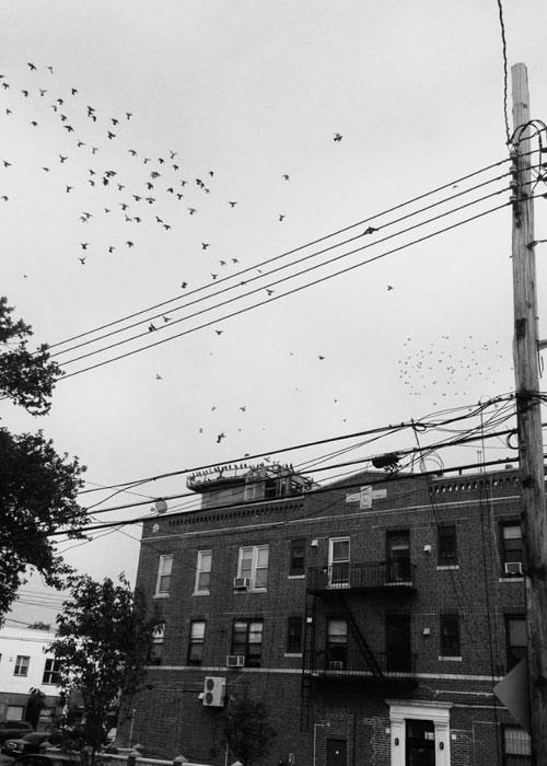 Scenes of Brooklyn (c) William Boyle
