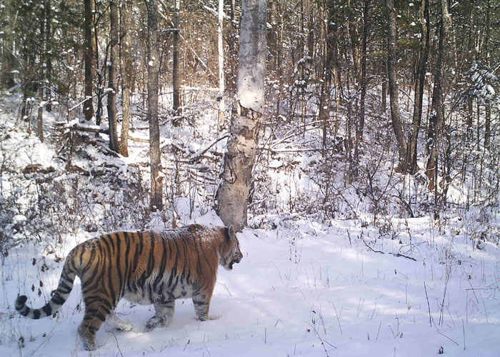 On location in the Russian Taiga (c) Polly Clark