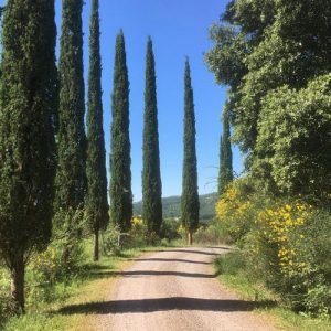 Dreaming of Tuscany, with author Trevor Williams