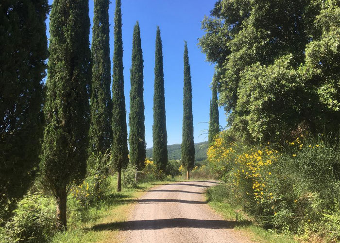 Dreaming of Tuscany (c) TA Williams